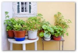 starting a potted vegetable garden at home
