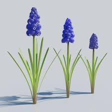 hyacinth flower grape hyacinth bulb flowers 3d cgtrader