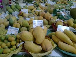 jumbo infomedia blog mirpurkhas mango festival inaugurated
