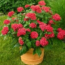 other flowering plants buy 6000 nursery plants n seeds