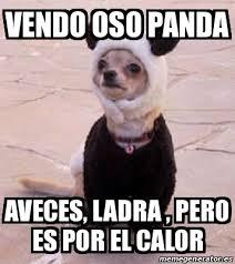 Memes De Pandas - meme personalizado vendo oso panda aveces ladra pero es por el
