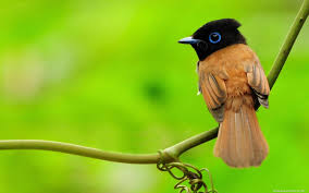 wallpaper with birds background free hd top most downloaded wallpapers page 3