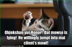 Lawyer Cat Meme - lawyer cat objects
