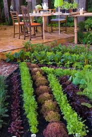 backyard food garden ideas decorating clear