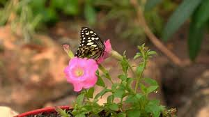 how to make a butterfly container garden making a butterfly