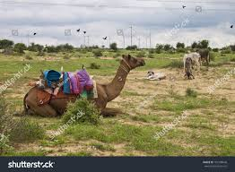 thar desert animals camel donkeys wind power plants thar stock photo 101208646
