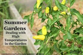 Summer Gardening - summer gardens dealing with high temperatures in the garden
