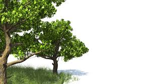 free hd 1080p backgrounds 3d animated tree and