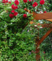 Plants For Pergolas by How To Build Your Own Pergola Step By Step