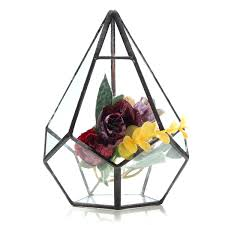 succulent plant triangle greenhouse glass terrarium diy micro