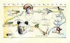 North Carolina wildlife images Nature wildlife gary palmer illustration jpg