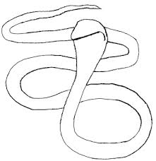 how to draw a snake draw step by step