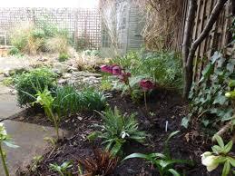 download plants for north facing garden solidaria garden
