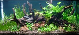 Asian Themed Fish Tank Decorations Should I Use Driftwood For My Aquarium Personal Aquariums Quora