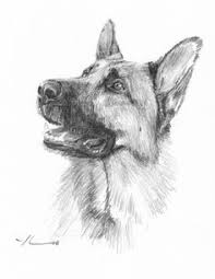 canine drawing tutorial gs by roseofaurora deviantart com on