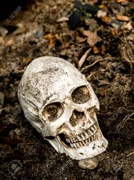 in front of human skull buried in the soil with the roots of