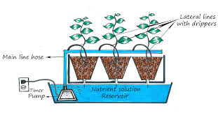 hydroponic passion hydroponic systems