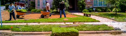 sod care sod planting sod tips