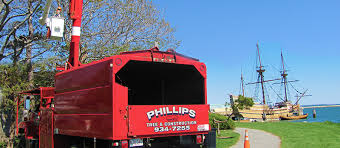 phillips tree and construction reputable and professional