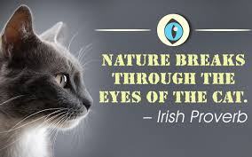 Awesome Quotes About Cats Being - an incredibly awesome collection of quotes about cats
