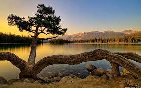 beautiful tree hd wallpaper wallpup com