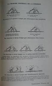 Poser Du Quick Step Notes On Quadrupedie