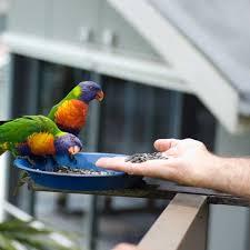 the dangers of bird feeding for wild birds ockham u0027s razor abc