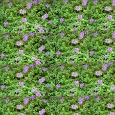 file purple floral wallpaper jpg wikimedia commons
