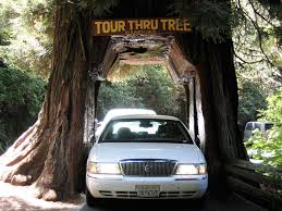 Chandelier Drive Through Tree Drive Or Walk Right Through America U0027s Coolest Tunnel Trees