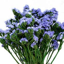 statice flowers preserved flowers statice sinuata blue