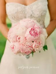 common wedding flowers common wedding flowers the wedding specialiststhe wedding