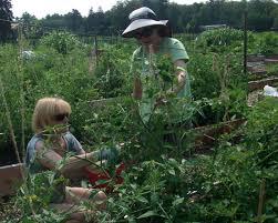 horticultural hints u2013 august u2013 betty on gardening