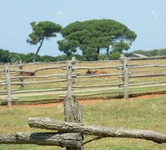 photo of cattle paddock fence details with trees and resting
