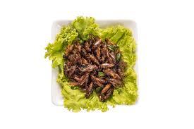 insecte de cuisine insecte de nourriture image stock image du insecte anomalies