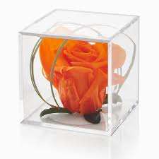 a single orange rose head in a presentation cube a lovely house