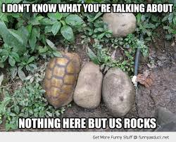 Funny Turtle Memes - funniest turtle memes turtle rock hiding animal funny pics