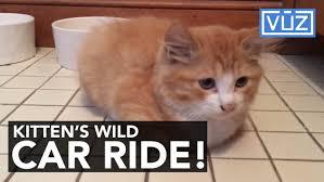 lexus amanda hand tattoo kitten car ride 1504126738 jpg
