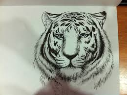 tiger pen sketch by yumikerr on deviantart