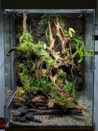 1000 ide tentang terrarium reptile di pinterest paludarium