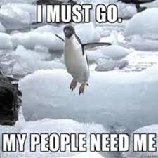 Peguin Meme - 24 memes that prove penguins are the funniest animals on earth