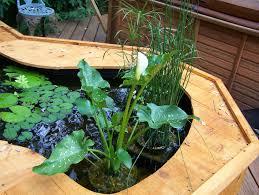 triyae com u003d raised garden pond kits various design inspiration
