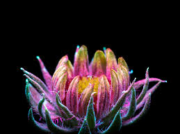 Pics Of Light by Remarkable Photos Capture The Light That Plants Emit Wired