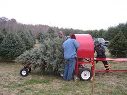 Christmas Tree Farm Va - pictures of middleburg christmas tree farm