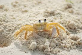 Sand Beach by Yellow And White Crab On White Sand Beach During Daytime Free