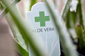 fake target black friday no evidence of aloe vera found in the aloe vera at wal mart cvs