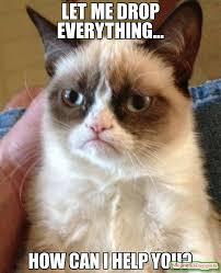 Can I Help You Meme - let me drop everything how can i help you meme grumpy cat