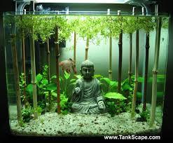 pretty awesome aquarium i am a fan of bettas much better than