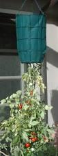 Upside Down Tomato Planter by Jeffco Gardener Upside Down Tomato Planters By Duane Davidson