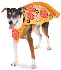 small dog witch costume amazon com pizza slice pet suit small pet supplies