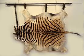 how to hang a zebra skin on the wall youtube